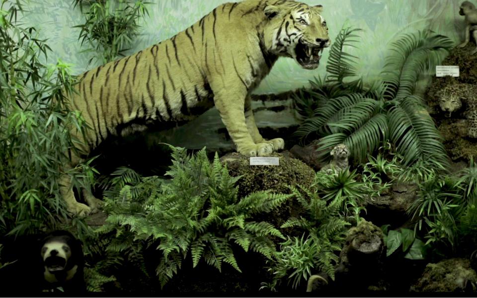 -tiger-200-kb