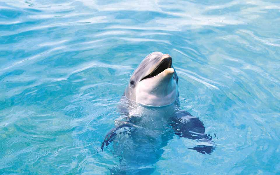 dolphin-dolphins-animals1