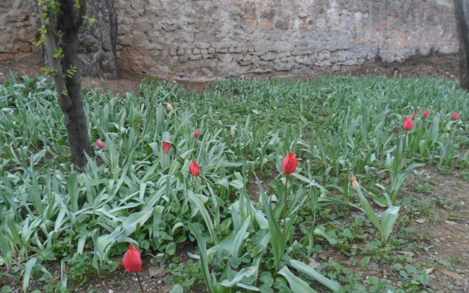 toulipes