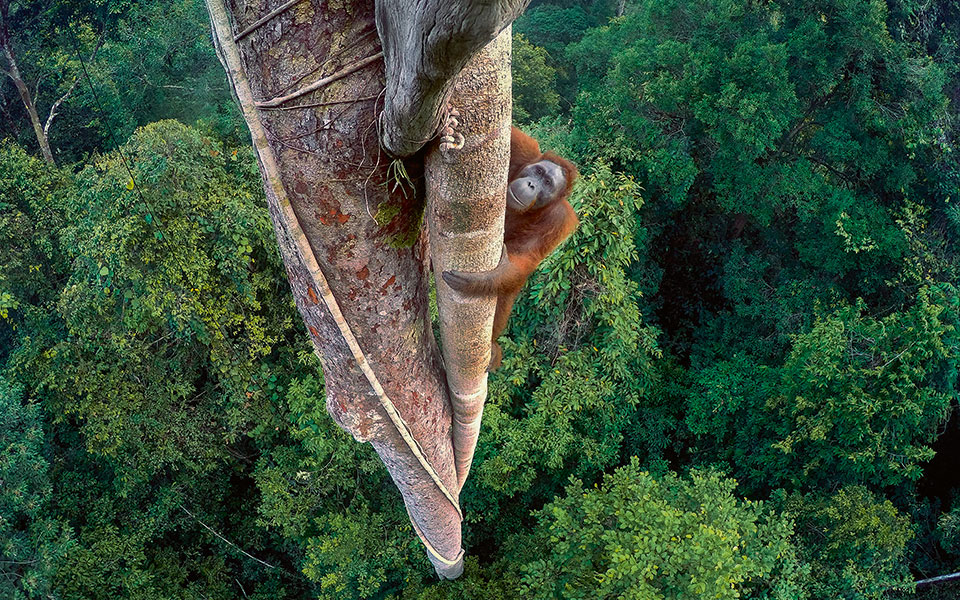 -tim-laman_wildlife-photo-copy