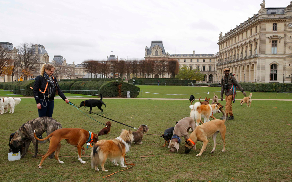 25s1dogwalkers-