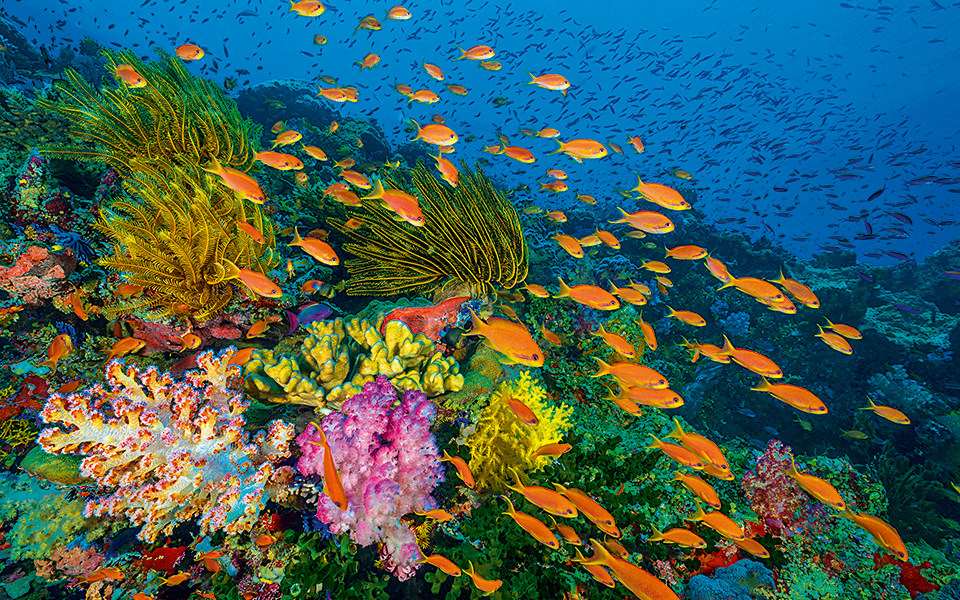coral-reefs_01_embargoed-internationally-until-00-01-bst-sunday-1st-october-2017--restricted-to-print-use-only--geo-blocked-online--embargoed-in-uk--eire-until-00-01-bst