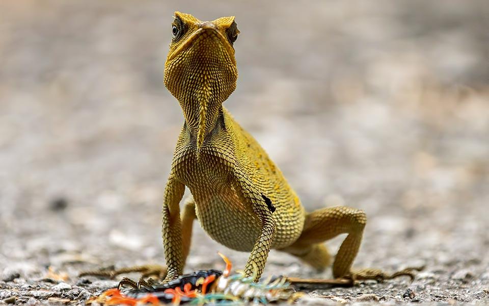-adam-hakim-hogg---wildlife-photographer-of-the-year