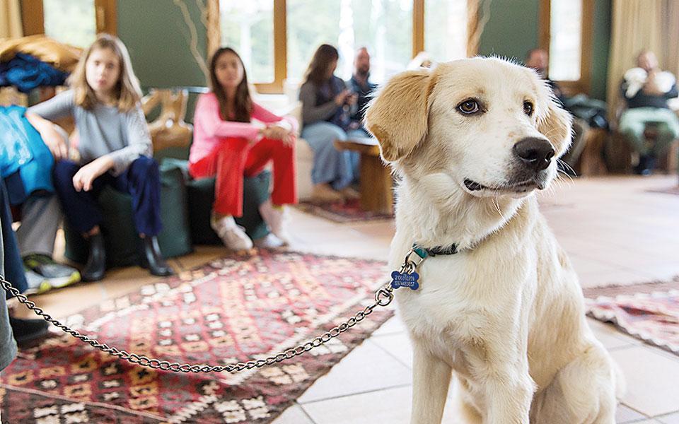 dog-weekend_16