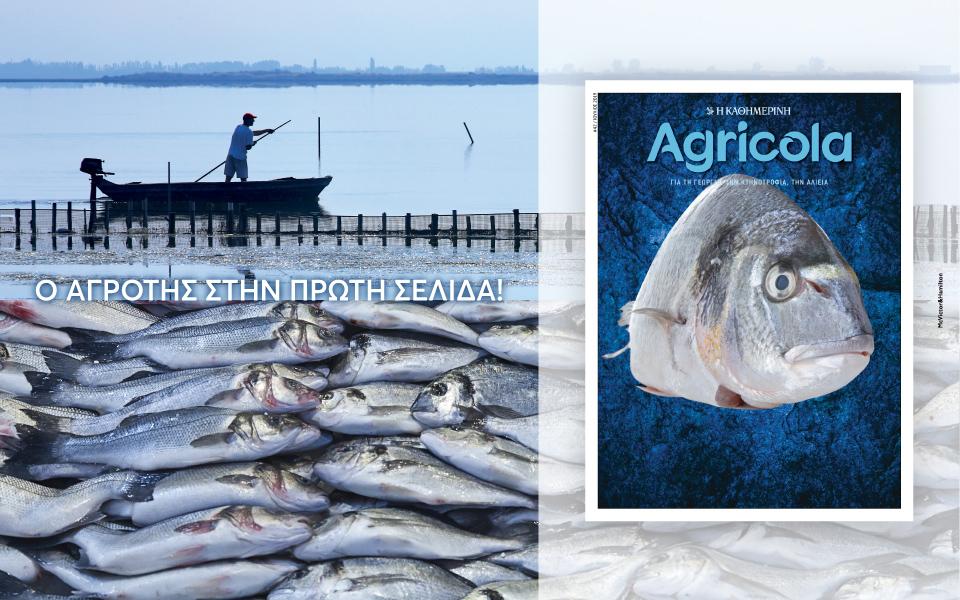 agricola_42_digital-banners_960x600