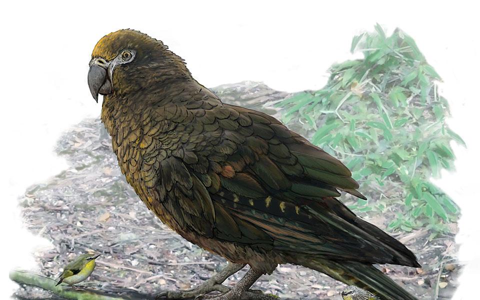 papagaloshraklhsphghbrianchoo-flindersuniversity