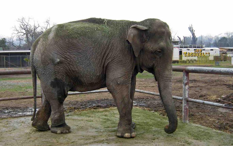 ελεφαντασ