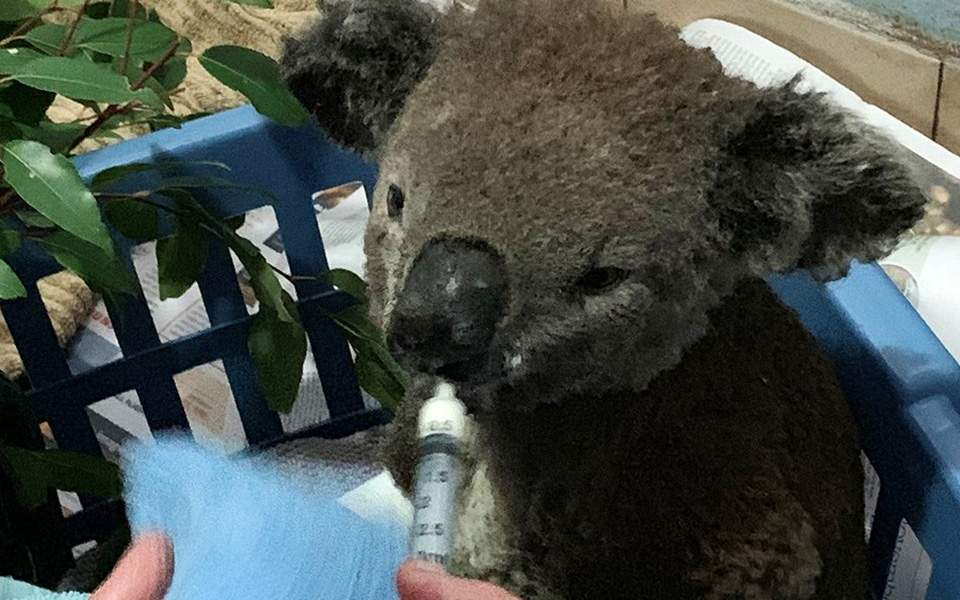 koala--2-thumb-large--2