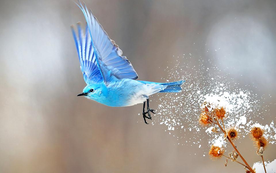 birds_in_flight_0058079564_large