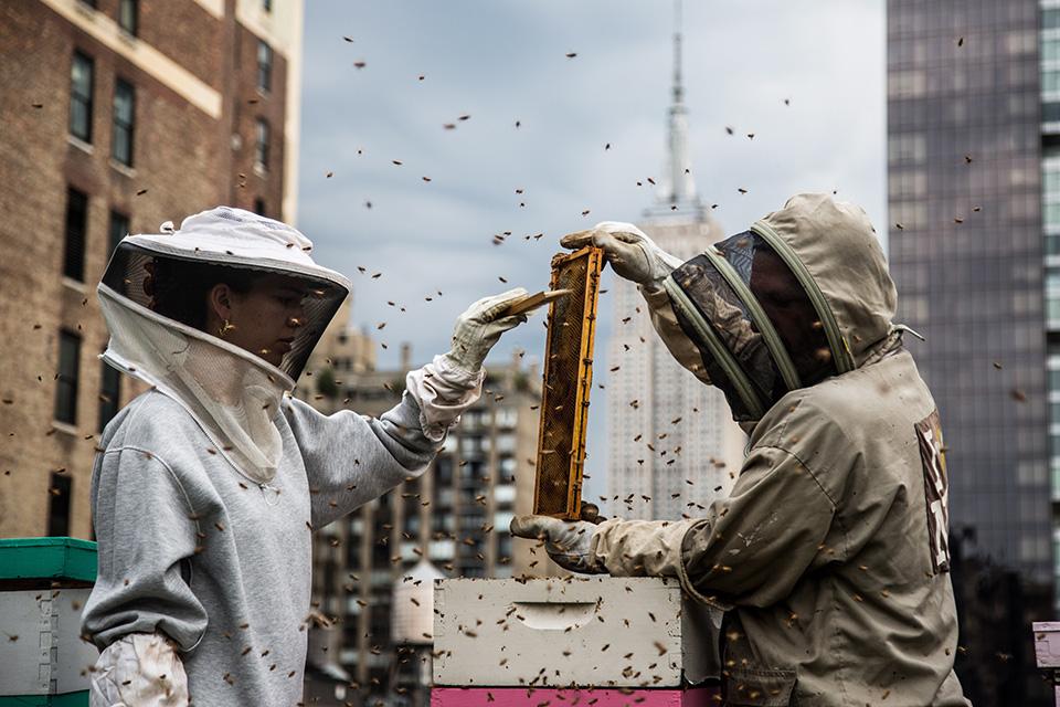 Μέλι από ουρανοξύστη