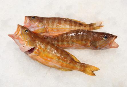 9-nostima-psaria-gia-thespesies-psarosoypes13