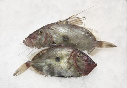 9-nostima-psaria-gia-thespesies-psarosoypes9