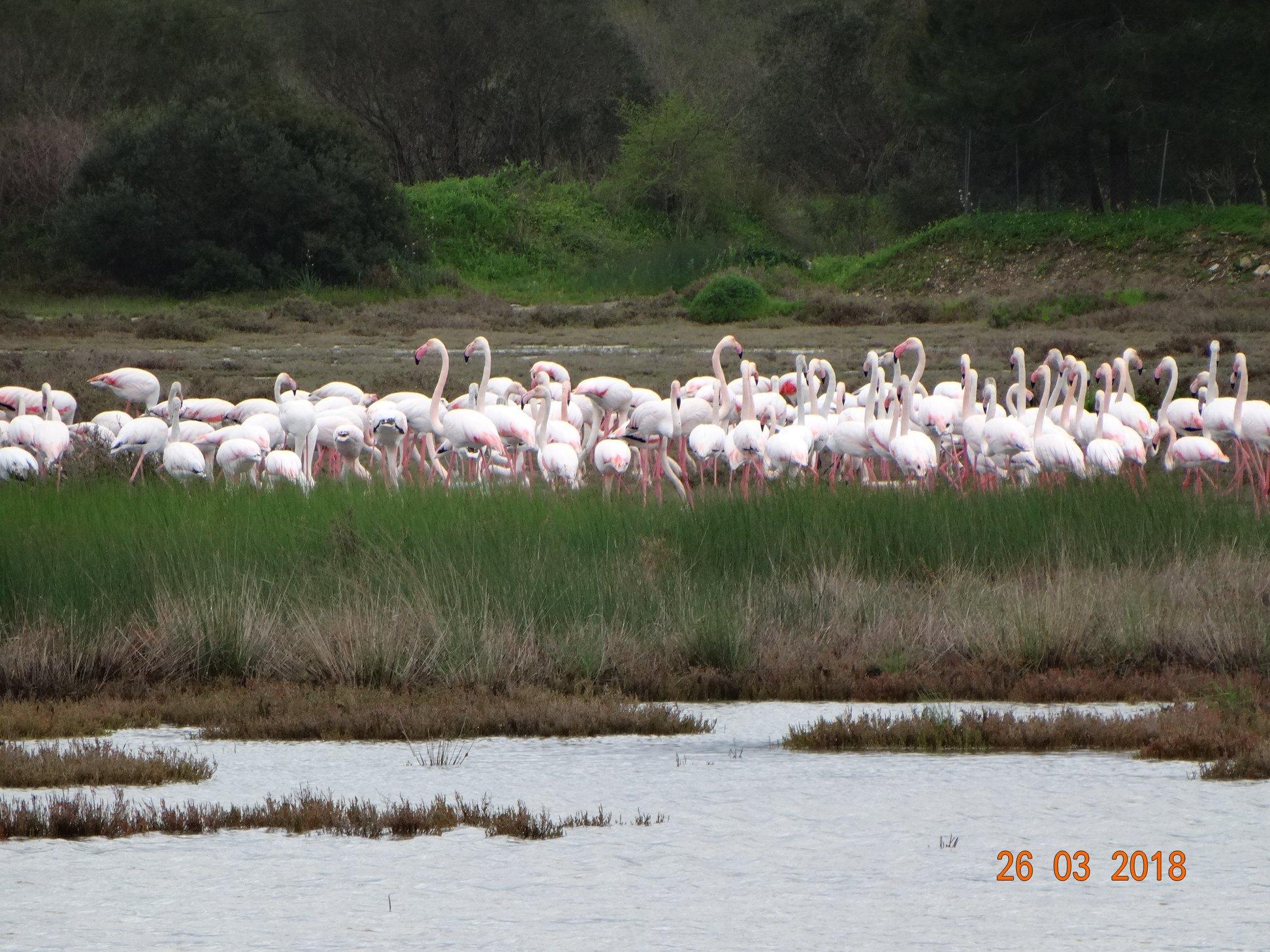 entyposiakes-eikones-apo-tin-afixi-ton-roz-flamingko-sti-limnothalassa-tis-leykimmis0
