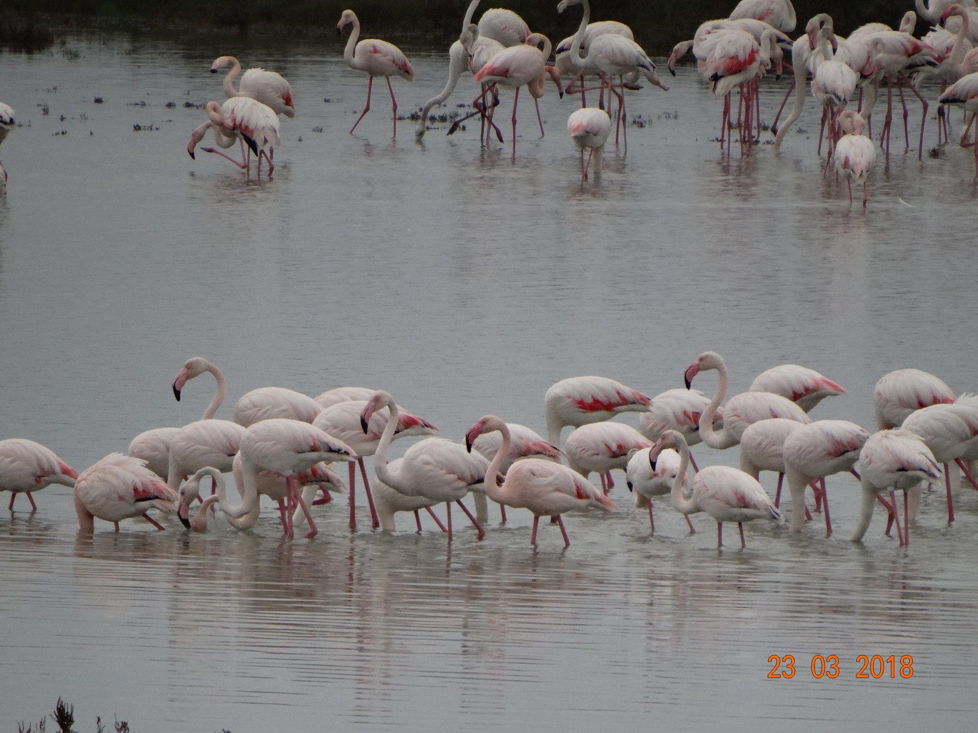 entyposiakes-eikones-apo-tin-afixi-ton-roz-flamingko-sti-limnothalassa-tis-leykimmis4