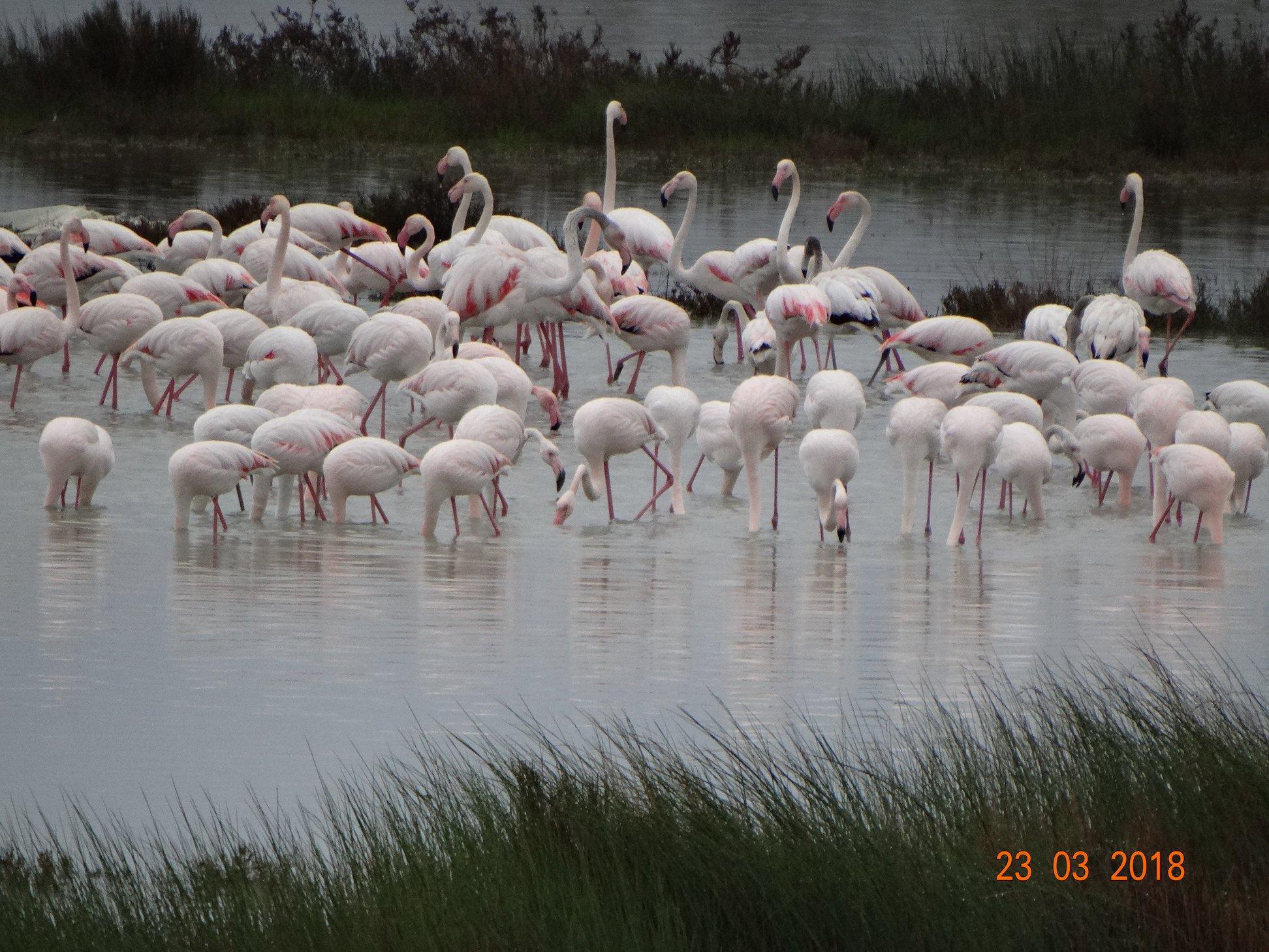 entyposiakes-eikones-apo-tin-afixi-ton-roz-flamingko-sti-limnothalassa-tis-leykimmis6