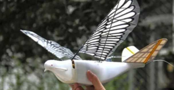 drones-metamorfonontai-se-peristeria-arkoydakia-kai-melisses1