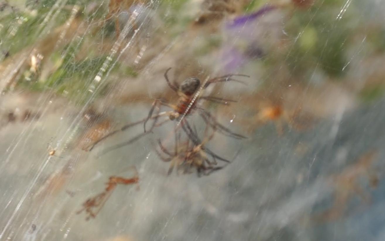 aitoliko-arachno-fanto-peplo-asynithiston-diastaseon-fotografies3