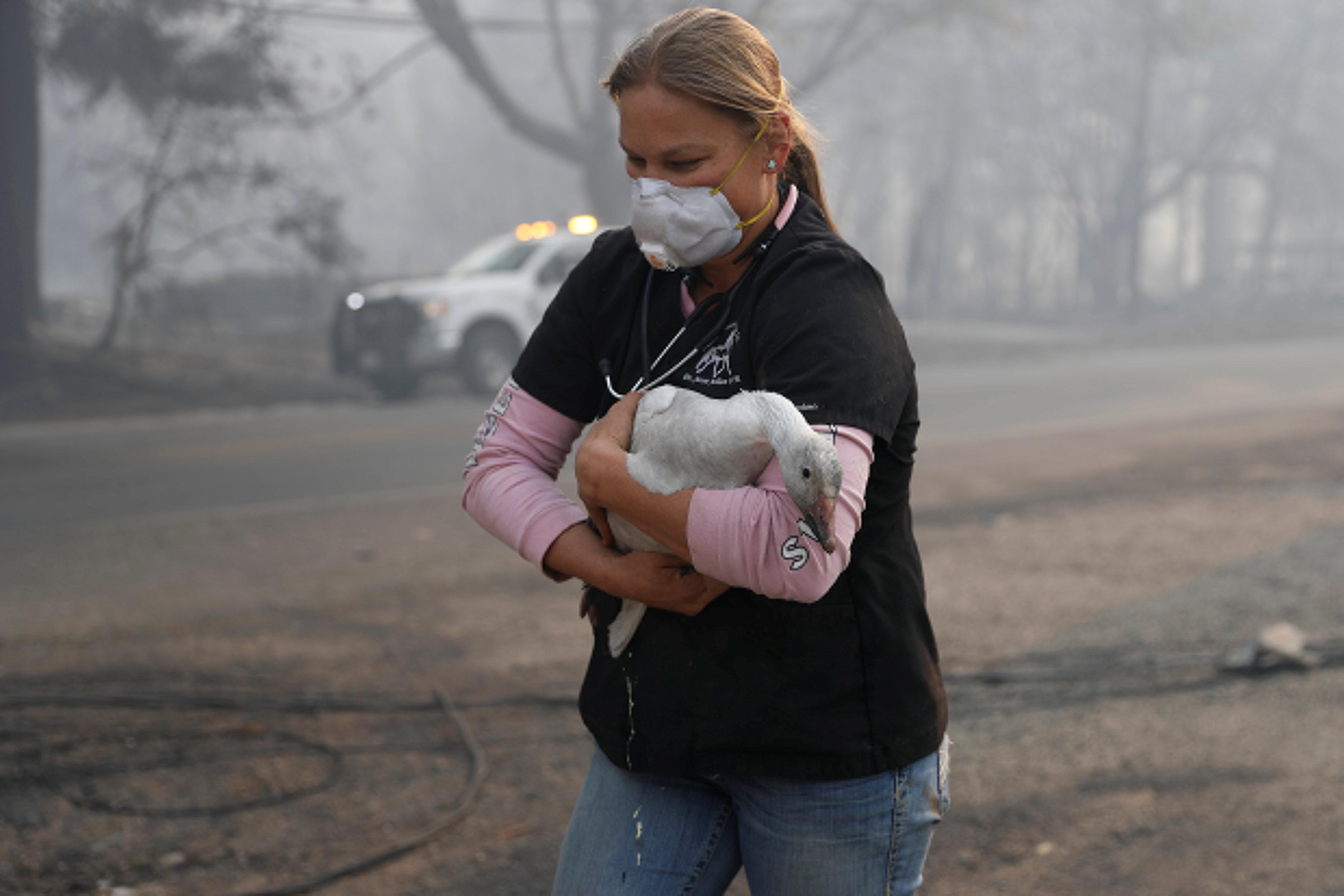 pyrini-kolasi-stin-kalifornia-25-nekroi-amp-8211-anypologistes-katastrofes-fotografies3