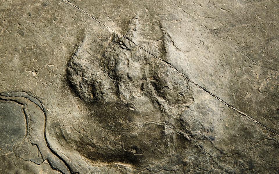 apotypomata-deinosayron-se-ethniko-parko-tis-pensylvania1