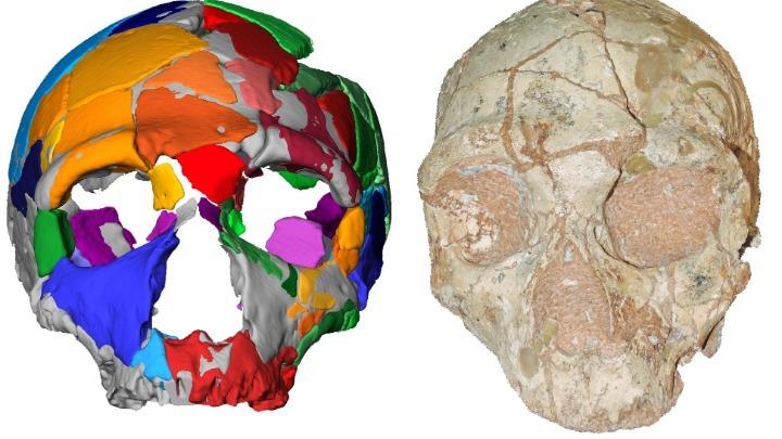 kranio-210-000-eton-apo-tin-ellada-to-archaiotero-deigma-homo-sapiens-se-oli-tin-eyrasia1