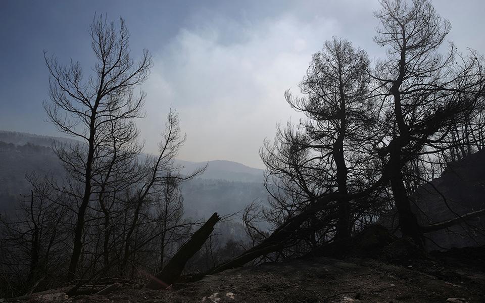 terastia-oikologiki-katastrofi-stin-eyvoia-amp-8211-stachti-28-000-stremmata-peykodasoys-fotografies13