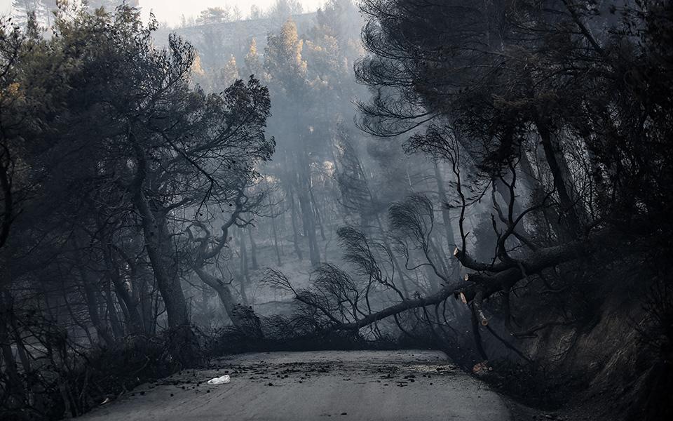 terastia-oikologiki-katastrofi-stin-eyvoia-amp-8211-stachti-28-000-stremmata-peykodasoys-fotografies4
