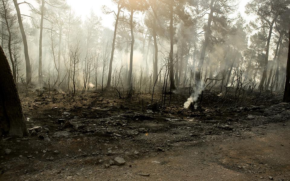 terastia-oikologiki-katastrofi-stin-eyvoia-amp-8211-stachti-28-000-stremmata-peykodasoys-fotografies3