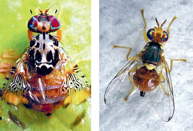 genetikos-diakoptis-gia-meiosi-entomon1