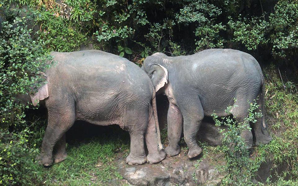 exi-elefantes-skotothikan-prospathontas-na-sosoyn-o-enas-ton-allon-fotografies1