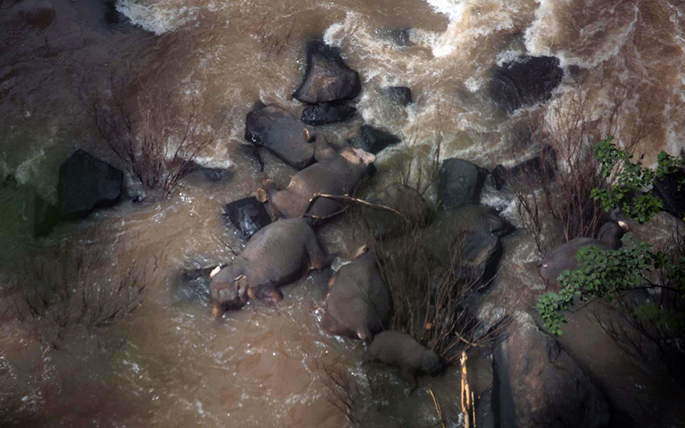 exi-elefantes-skotothikan-prospathontas-na-sosoyn-o-enas-ton-allon-fotografies0
