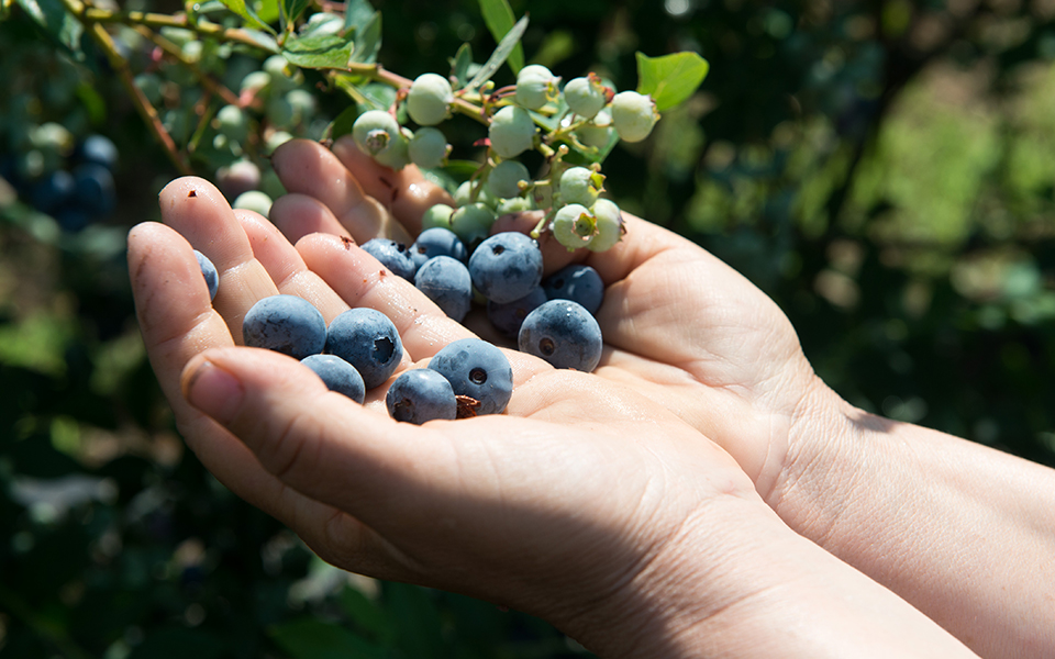 vraveia-poiotitas-gastronomoy-2019-kai-omos-exagoyme-blueberries1