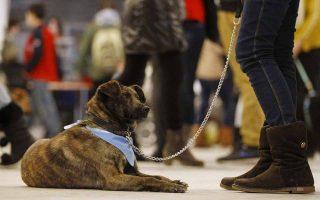 Εκδήλωση για τα αδέσποτα ζώα στη Λευκορωσία