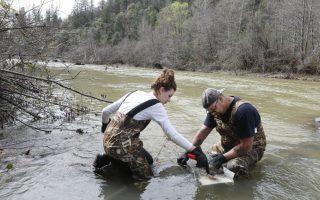 Χρυσοθήρες νέας κοπής. Ο Tim Amavisca 38 ετών και η κόρη του Hailey,15  φιλτράρουν χαλίκια και νερό του ποταμού, ψάχνοντας για ψήγματα χρυσού. Ο Tim είναι από τους νέους χρυσοθήρες που έχουν κατακλύσει  την  περιοχή της Sierra Nevada, διάσημη από το παρελθόν για το χρυσό της. Φέτος θεωρείται μια ιδανική χρονιά για την ανεύρεση χρυσού με αυτό τον τρόπο, λόγω της χαμηλής  στάθμης των ποταμών, κάτι που έχει να συμβεί για δεκαετίες. AP Photo/Rich Pedroncelli