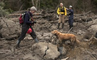 epa04140824 Search and rescue member Joanne Varney (L) with dog mADDee, 7, in the Highway 530 debris field after a mudslide near Oso, Washington, USA, 25 March 2014. Authorities have advised that while 14 fatalities have been confirmed, there are still upwards of 176 reports of missing people or unaccounted individuals. The mudslide occurred early 22 March when the rain-soaked side of a mountain in Snohomish County broke free without warning and slammed into the homes, highway and a river below.  EPA/MATT MILLS MCKNIGHT