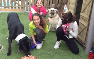 dog-party0