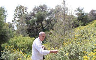 Ο κ. Αντώνης Ζώης σε μια εξερεύνηση στον αγαπημένο του Λυκαβηττό, περιστοιχισμένος από άνθη ασφάκας.
