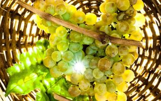 Η σειρά αφρόλουτρο και κρέμα σώματος «Αμπέλι Σαντορίνης», εγκαινιάζει τη συνεργασία της «Κορρές» με την Ενωση Συνεταιρισμών Θηραϊκών Προϊόντων/Santo wines. Βέβαια, η καλλυντική σειρά θα βρίσκεται σταδιακά στα φαρμακεία όλης της χώρας, ενώ από τέλη του τρέχοντος μήνα θα εξάγεται στην Αμερική και τη Γερμανία.