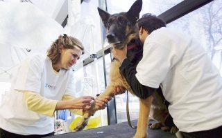 Οι επιστήμονες πιστεύουν ότι εάν εντοπίσουν κάποιες αλλαγές στη συμπεριφορά ενός γονιδίου στα σκυλιά που νοσούν ή των συνδέσμων ανάμεσα στα γονίδια που γνωρίζουν ότι εμπλέκονται στην εξέλιξη της κακοήθειας, τότε θα μπορούν να αναζητήσουν την αντιστοιχία και στους ανθρώπινους καρκίνους.