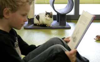 epa04141904 A child reads to a cat in the animal shelter in Amersfoort, The Netherlands, 26 March 2014. Both asylum cats and children benefit from the reading: the children in terms of improving their reading skills, the cats revel in hearing the sound of a voice.  EPA/MARCO DE SWART