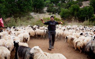 Ο κτηνοτρόφος Γιώργος Μανουράς λέει ότι οι περισσότερες διαφορές στην ορεινή Κρήτη προκύπτουν από ζωοκλοπές (Φωτογραφία: Enri Canaj).