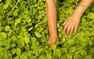 Η χρήση λιγότερων παρασιτοκτόνων στα βιολογικά προϊόντα τα καθιστά ελκυστικά σε πολλούς καταναλωτές.