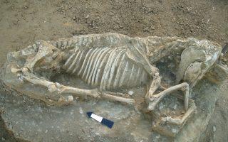 Η ταφή αλόγου, που εντοπίστηκε στην αρχαϊκή νεκρόπολη της Χίου, είναι η πρώτη που έρχεται στο φως στην περιοχή του βορειοανατολικού Αιγαίου.