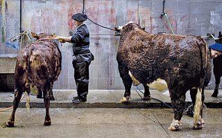 Περιορίστε την κατανάλωση βοδινού και θα σώσετε τον πλανήτη από το φαινόμενο του θερμοκηπίου και τη μεταβολή των κλιματικών συνθηκών.