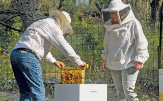 Το 65% της ελληνικής παραγωγής είναι πευκόμελο και προέρχεται από μέλισσες που έχουν τραφεί με τις εκκρίσεις του εντόμου Marchalina hellenica.