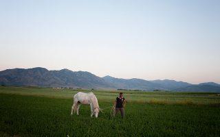 Ο Αλμπάν Σεριάνι, με την φοράδα Λόνα που προσέχει στην πεδιάδα της Κορυτσάς. Ο Αλμπάν ήταν παλιότερα παιδί των φαναριών.
