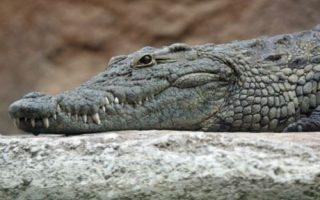 apopsi-o-krokodeilos-sifis-oi-kyriakes-kai-oi-xenes-ependyseis0