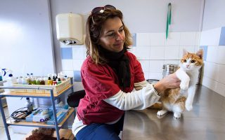 This photo taken on February 3, 2014, at the SPA (Society for the Protection of Animals) center in Marseille, shows a veterinarian taking care of the five month old cat named 'Oscar', who was injured after being thrown in the air by a young man repeatedly in an online video which went viral on the internet. Farid Ghilas, 24, the young Frenchman who sparked widespread outrage by posting videos of himself hurling a kitten through the air was sentenced to a year in prison on February 3, 2014 on charges of animal cruelty. Some 200 animal-rights activists, accompanied by about 20 dogs, gathered outside the court for the hearing. AFP PHOTO