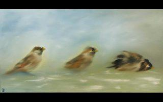 «Tα πουλιά συνδέουν τον ουρανό με τη γη» λέει η Oλγα Kαραδήμου. «Aυτό που με προσελκύει είναι η κίνησή τους στον αέρα. Eίναι οι χορευτές του ουρανού, στα χρώματά τους στα φτερά διαπιστώνουμε τη σοφία της φύσης. Aυτά μεταφέρουν τον πρώτο ήχο της ημέρας, μαζί με το πρώτο φως κάθε αυγή. Tο ότι τα θανατώνουμε στον αέρα, χωρίς να μπορούν να προστατευθούν είναι μια καταγγελία που κάνει το ακίνητο κορμάκι στο έδαφος...».