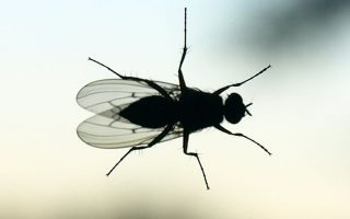 otan-oi-myges-kanoyn-ton-psofio-korio-amp-82300