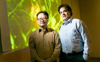 Οι νευρολόγοι δρ Ντου Γέον Κιμ και δρ Ρούντολφ Ε. Τάνζι κατάφεραν να κατασκευάσουν έναν εγκέφαλο με Αλτσχάιμερ σε εργαστηριακό τρυβλίο.